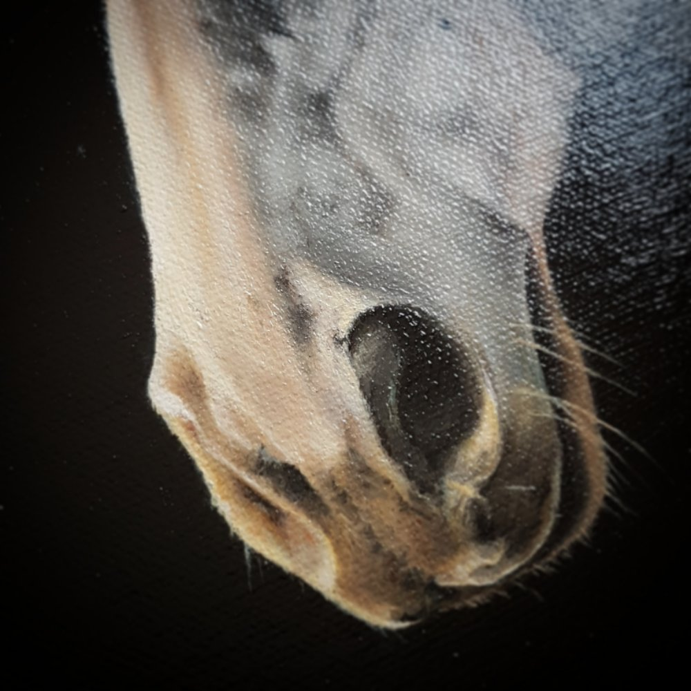 Nose section of varnished painting of horse